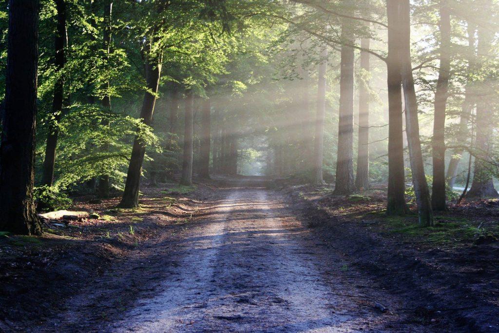 Bois de montmaur parc forestier a découvrir sur Montpellier